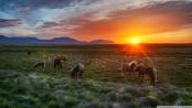 wild_horses_at_sunset-wallpaper-1920x1080.jpg